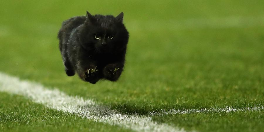 NRL Telstra Premiership: Round 19 Preview. Will Pepper the Cat make a return after his debut?